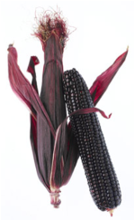 Purple Maize